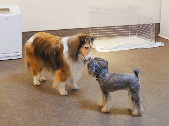 老犬介護2