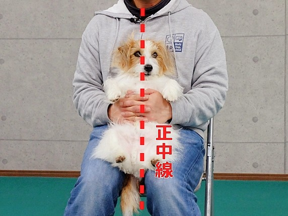 lion-sakku11b