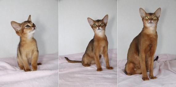 ペットライブス子猫2と4と3