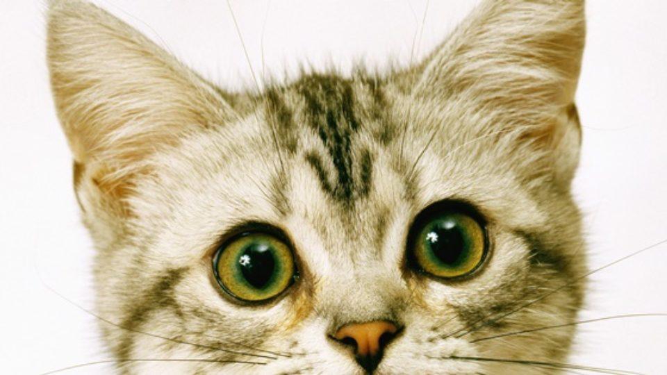 目やに 子猫