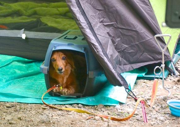 ペットライブス犬キャンプ2