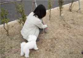犬、写真、フォト、新美敬子、犬猫写真、撮り方、中村仁美