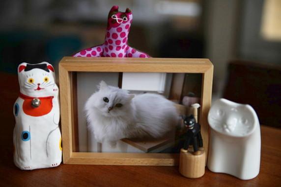 猫、写真、フォト、新美敬子、犬猫写真、撮り方、中村仁美