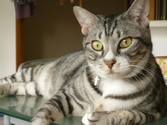 清水満,猫の一休建築士,猫の住環境学,室内汚染,換気設備,新築住宅