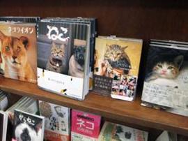 LIFE,ペット,猫,清水満,キャットライフ・キュレーター,猫の一休建築士,神保町にゃんこ堂,猫本専門書店