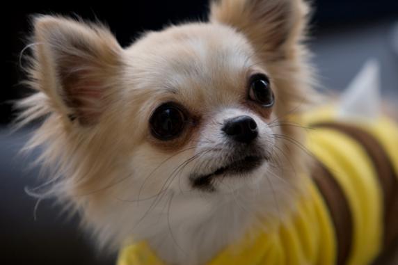 しつけ,甘え行動,petlives,ペットライブス,LIFE,ペット,犬,牧口香絵,獣医師,ペットの行動コンサルテーション,Heart Healing for Pet