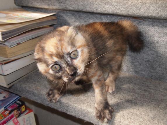 ペットライブス,PetLIVES,猫,猫の気持ち,富田園子,日本動物科学研究所会員,うちの猫のキモチがわかる本,はじめての猫 飼い方・育て方,うちの猫の長生き大事典,猫と一緒に暮らす女の子のための飼い方ブック,幸せなハムスターの育て方,小鳥のキモチ