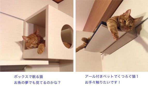 ペット,猫,清水満,キャットライフ・キュレーター,猫の一休建築士,猫の住環境学,ペット用建材