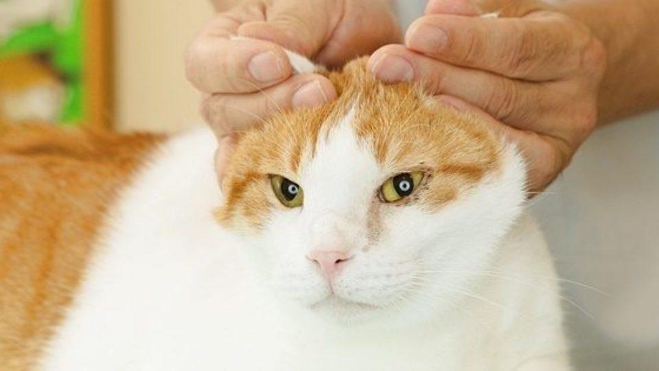 愛猫の夏バテ予防と健康促進に! 簡単マッサージとツボ刺激