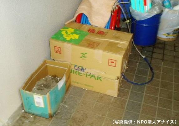 05_段ボールハウス猫1