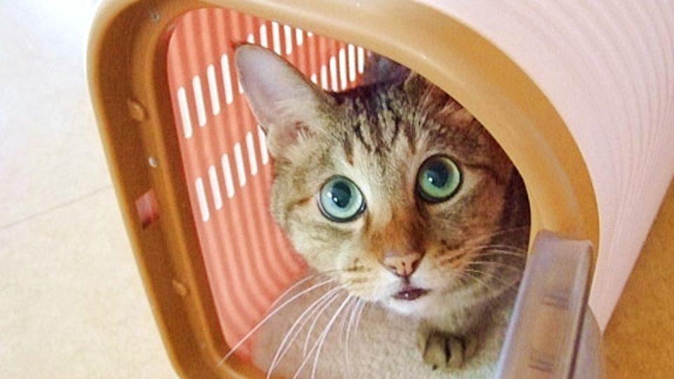 【犬猫の防災】災害時の命綱は多いほうが良い―ペット防災のプロに聞く(3)
