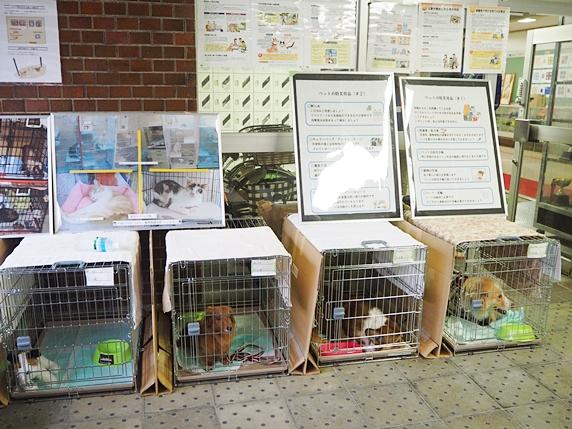 避難訓練でケージに入る犬たち