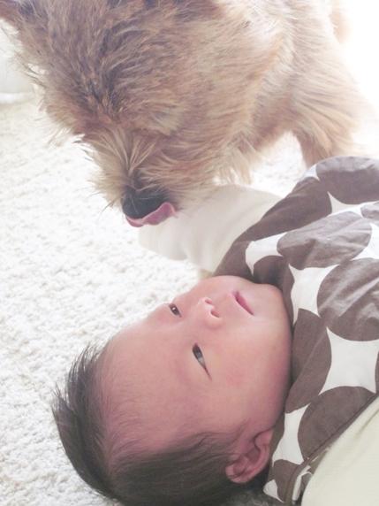 151102_babydog1_429x572