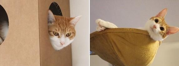 cats④ 572×213