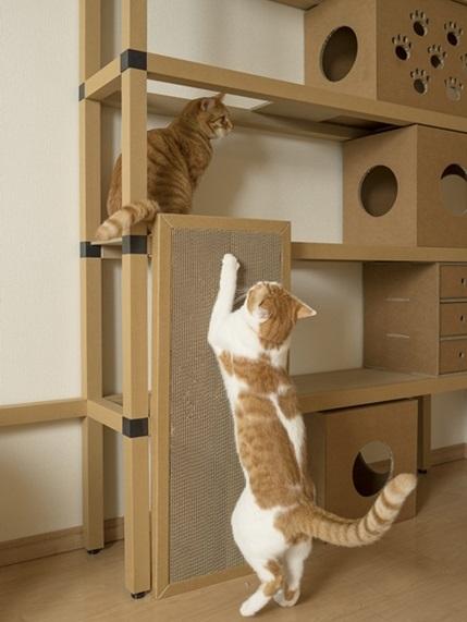 cats⑤ 429×571