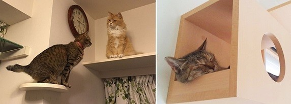 cats①571×201