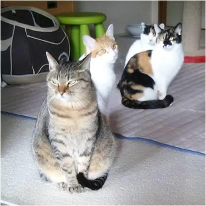 愛猫ギャラリー