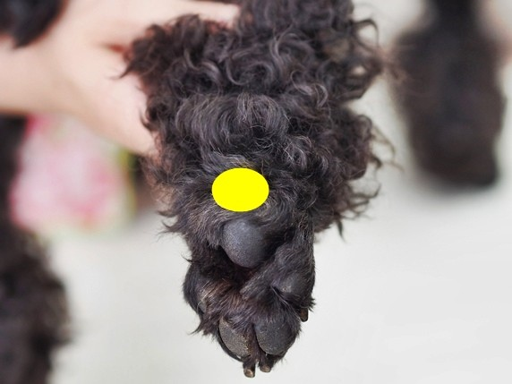 犬ツボ_6