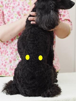 犬ツボ_4