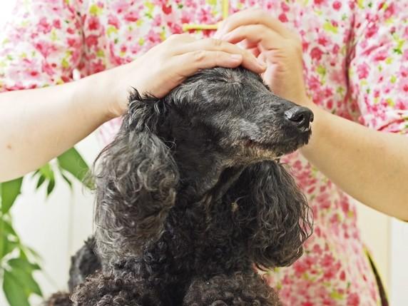 犬ツボ_1