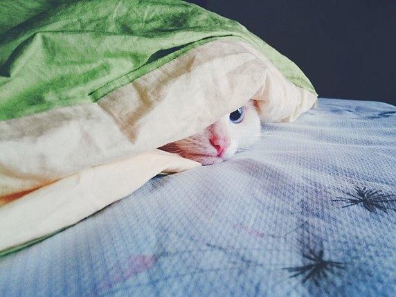 kitty-1785031_1280_ネコ布団_572
