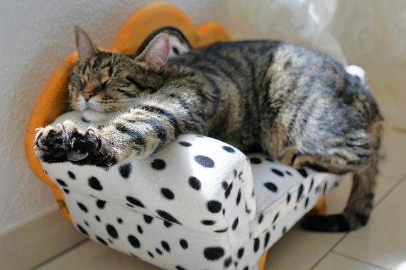 cat-2360863_1920_572