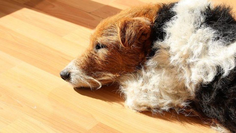 シニア犬に訪れる体や行動の変化と、7つのアンチエイジング策|行動学専門の獣医師が解説