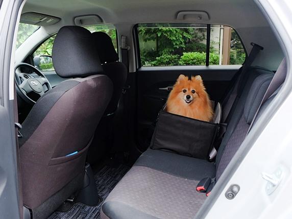 ひまわり車中泊