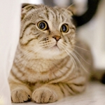 cat-438477_150