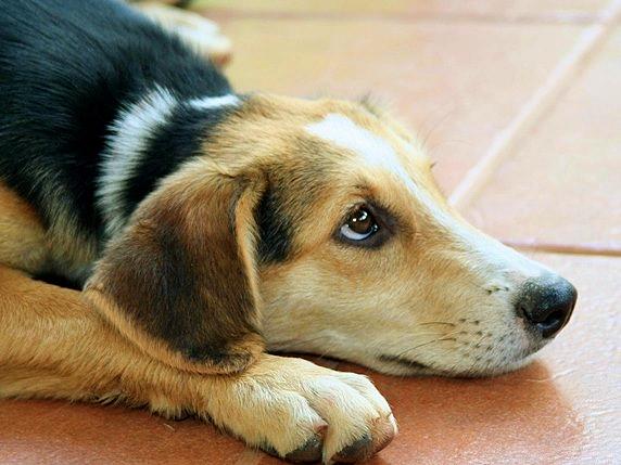 dog-2362543_1920_572b