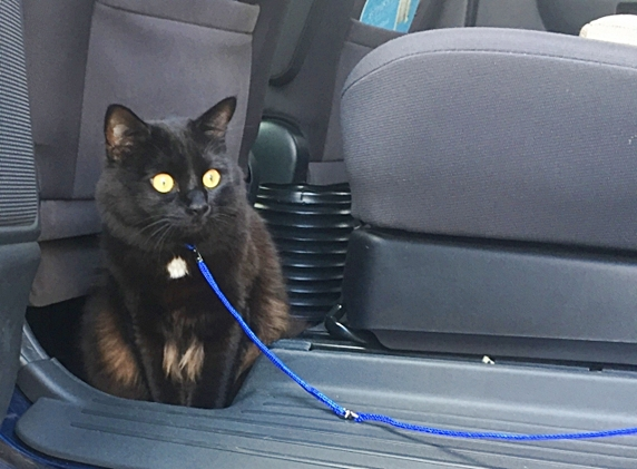 車中泊猫_572b