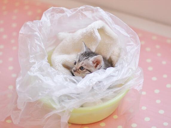 ビニール袋とタオルにつつまれた子猫
