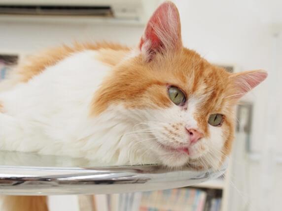 机の上に寝転がる猫