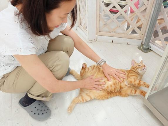 お腹を出した猫をなでるライター富田さん