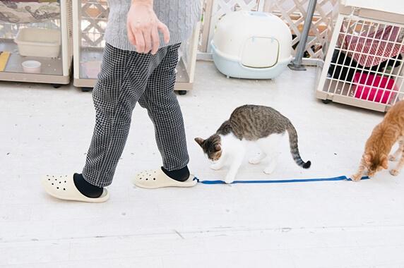 スリッパについた紐を追う猫たち