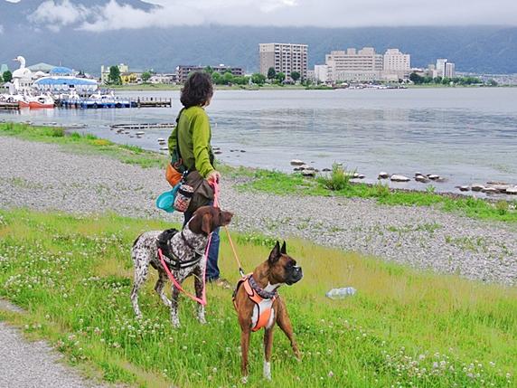 諏訪湖畔に立つ2頭の犬と飼い主