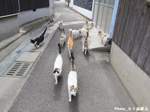 たくさんの猫の行進