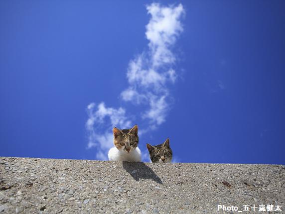 上からのぞき込む子猫2匹