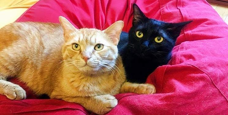 ピンクのクッションに寝ころぶ茶トラ猫と黒猫の兄弟