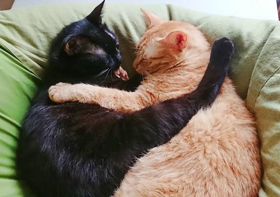 抱き合って眠る黒猫と茶トラ猫