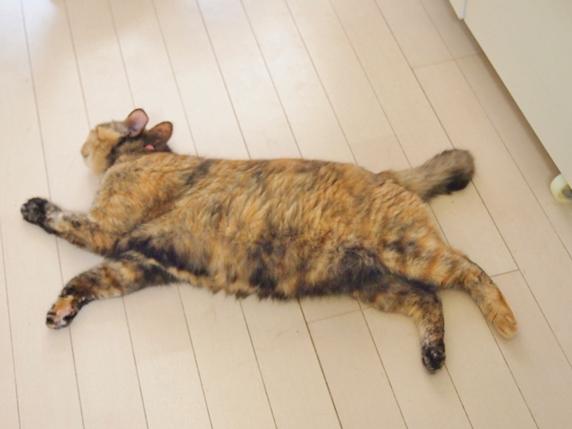 寝転ぶサビ猫