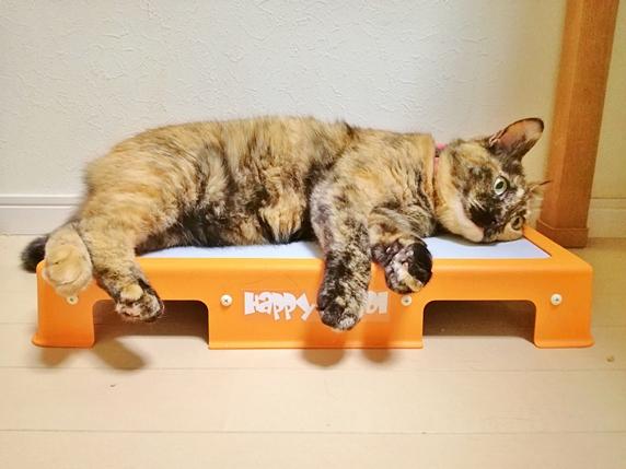 はっぴい&クールに乗って寝るサビ柄の猫