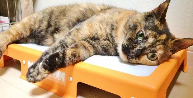 クールマットの上に寝るサビ柄の猫