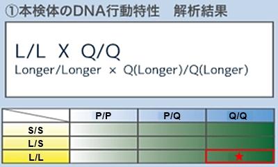 甲斐犬サウザーのDNA行動特性解析結果