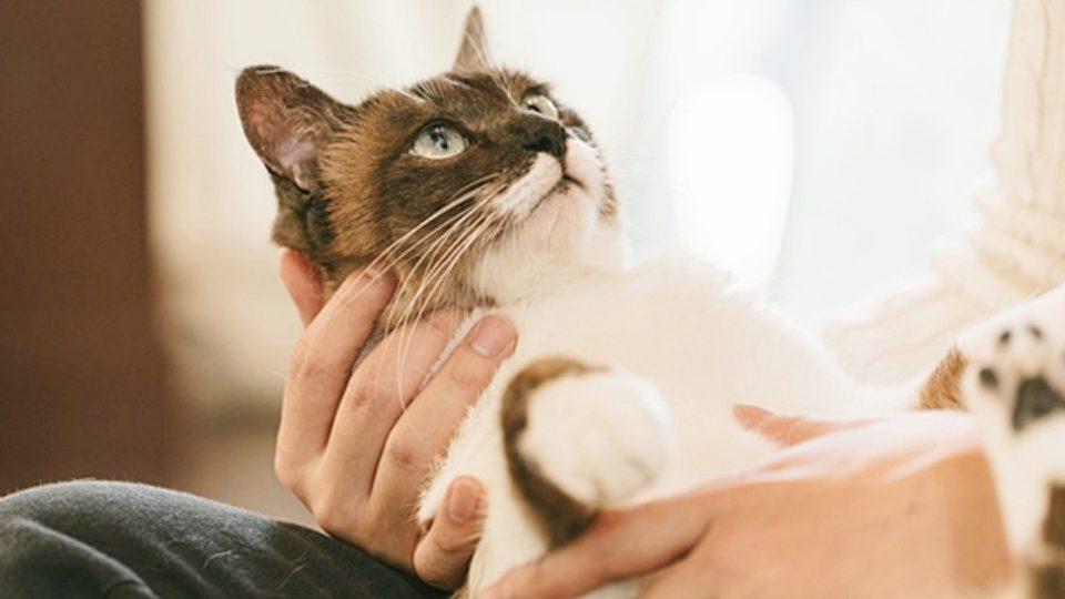 人慣れしていない保護猫を迎えたら?信頼関係を築く5つのポイント|行動学の専門獣医師が解説
