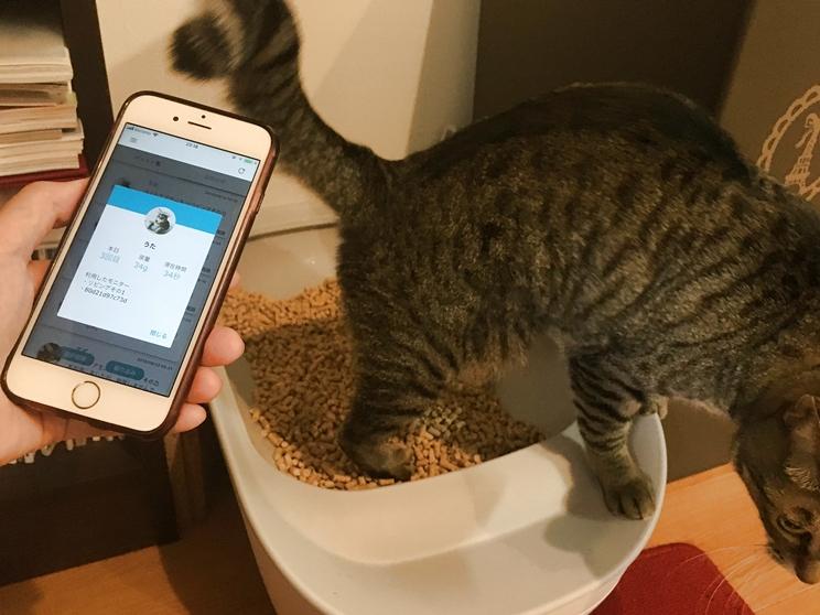 アプリでトイレを使用しているかチェック