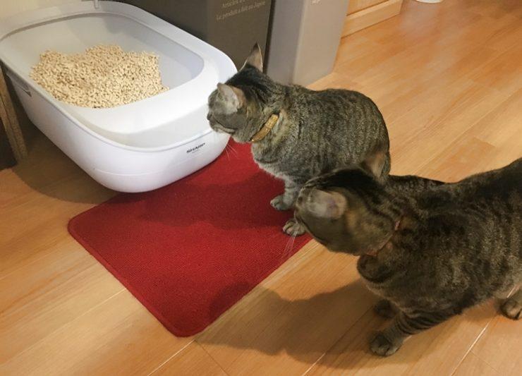 ペットケアモニターを見る猫2匹