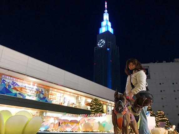 新宿のイルミネーションとボクサー犬