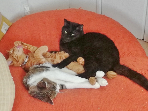 朱色のクッションの上に寝転ぶ猫3匹