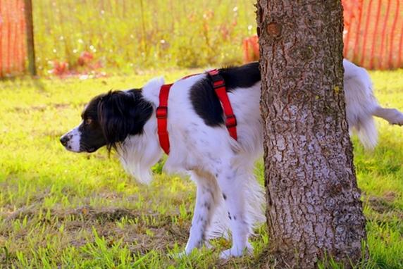 木にマーキングするボーダーコリー
